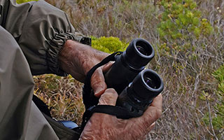 Binoculars for birding: What the experts use