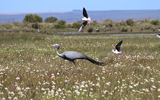 Become a better birder: Join an Overberg bird club