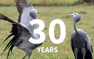 30 years of protecting Blue Cranes